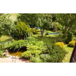 Ogród - Kliknięcie spowoduje wyświetlenie powiększenia zdjęcia